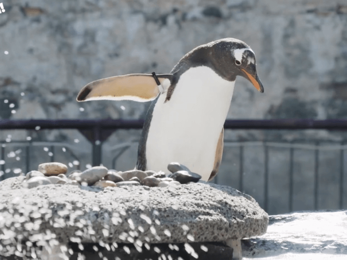 Akvariet – Dyrene på Akvariet